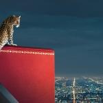 Cartier Watchmaking Encounters; un escaparate virtual para el 2020
